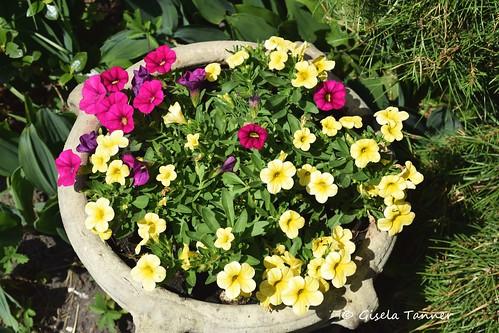 Grüße aus meinem Junigarten