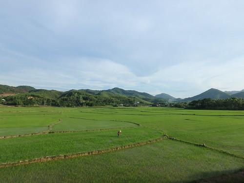 phong-nha-rice-fields-2