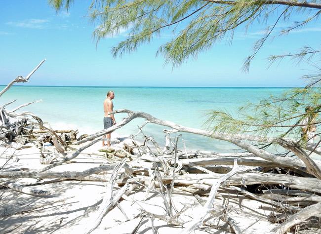 dead-branches-shore