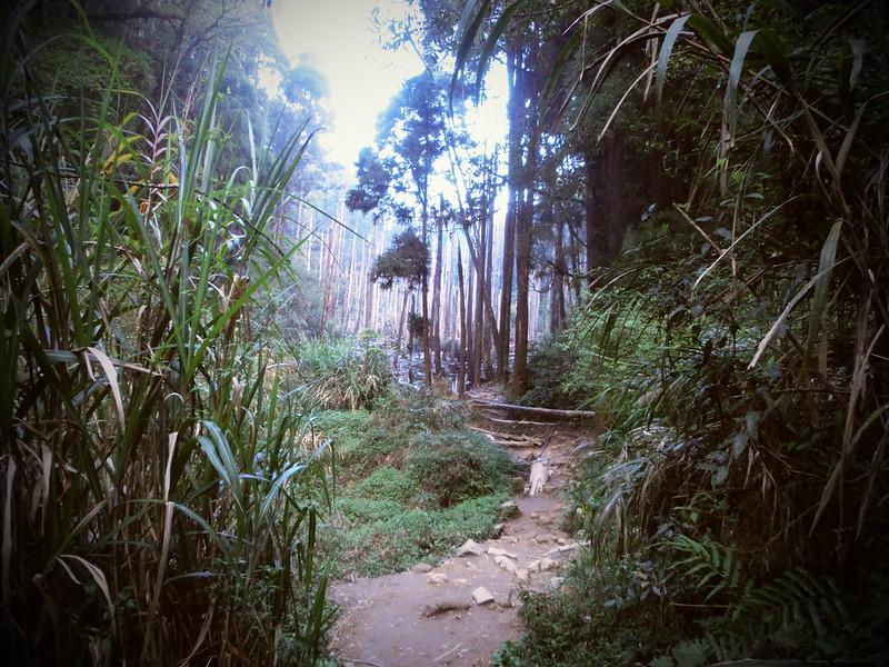 Taiwan Island trips。Couchsurfing。環島景點。南投秘境。忘憂森林。17度C隨拍。  (25)