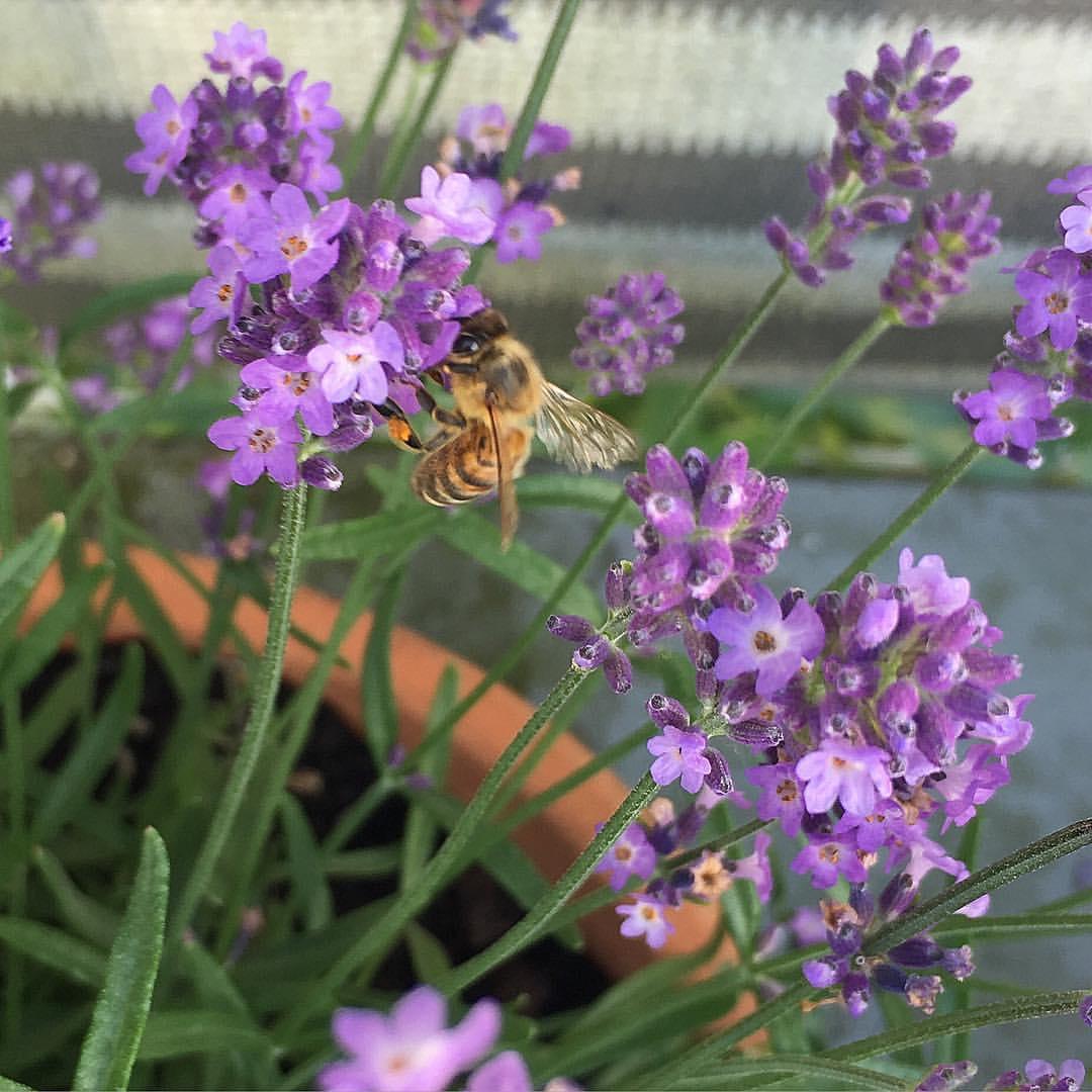 My own little Provence // Филиал Прованса в Мю