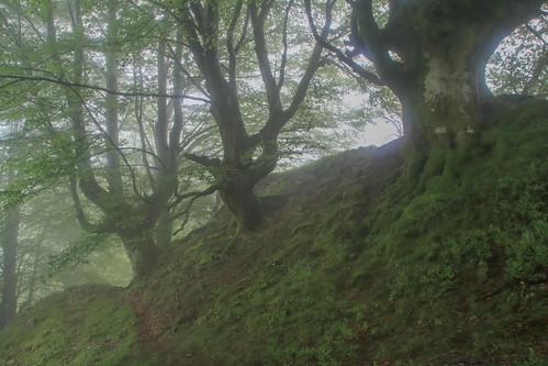 Parque Natural de #Gorbeia #Orozko #DePaseoConLarri #Flickr - -487