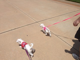 The pups get out and about!