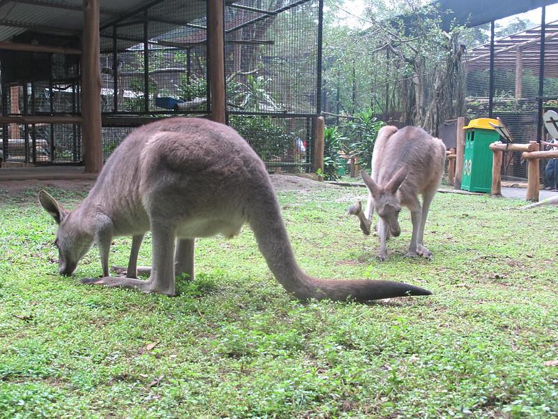 Baby Zoo
