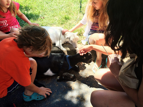 Old Beach Farmer's Market (Petting the Goats) (August 15 2015) (1)