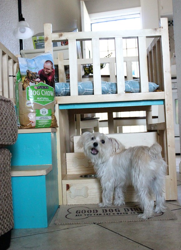 Purina Dog Chow Natural Dry Dog Food #MyPetMyStar