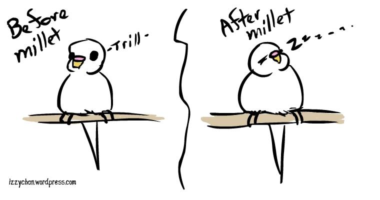 white bird budgie