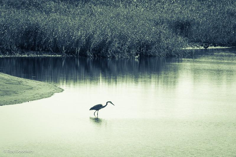 Parker River WIldlife Refuge