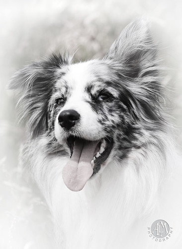 Duke B+W Portrait | by redshift1960