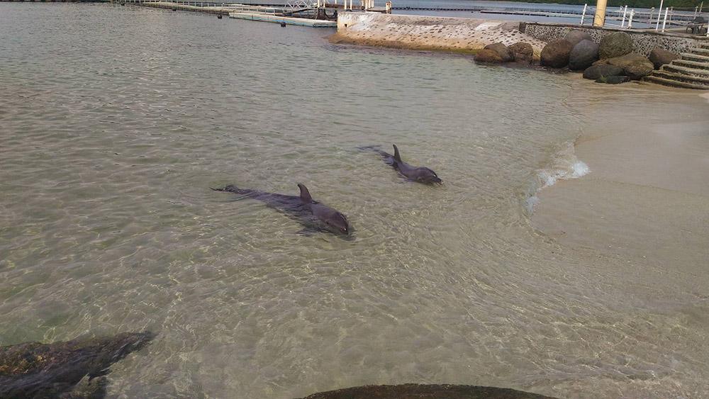 Subic Ocean Adventure Dolphins