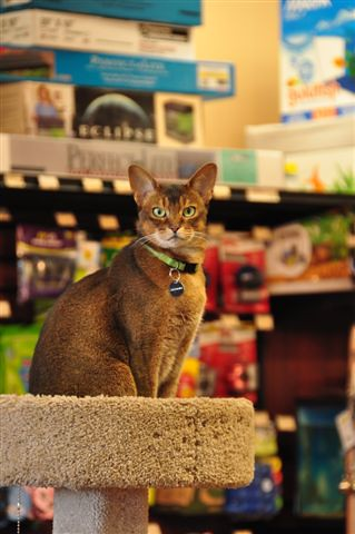 June Store Pet of the Month: Gloamin | by Pet Valu