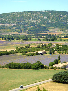 Provence Lavender Fields | by DolceDanielle