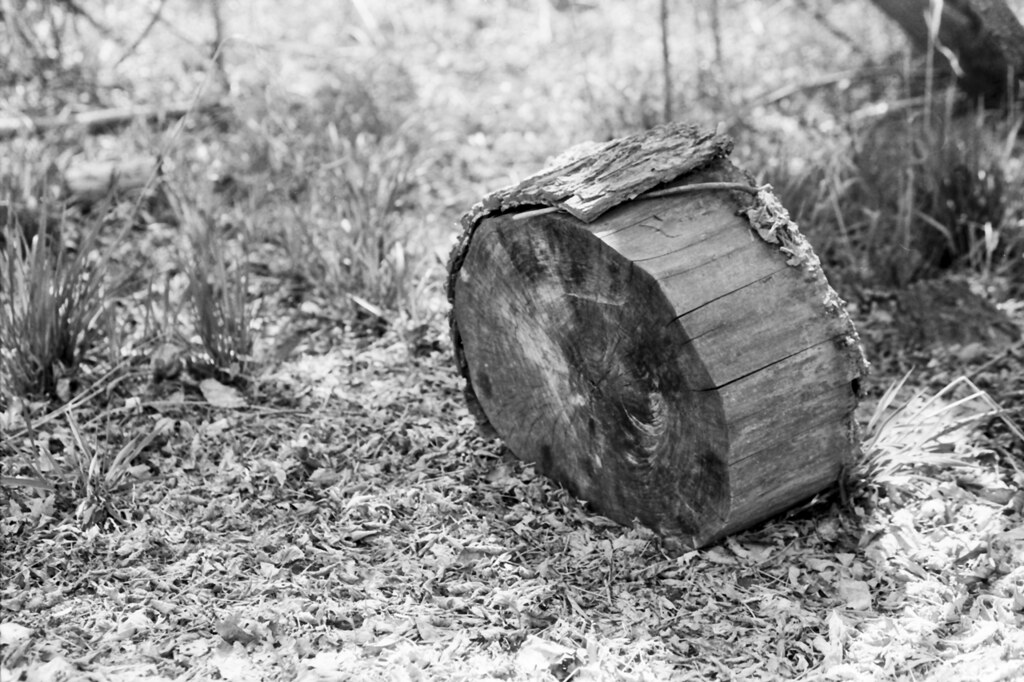 Firewood (Nikon Version)
