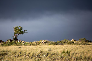 Bent Tree in Storm Clouds & Light | by TylerKnott