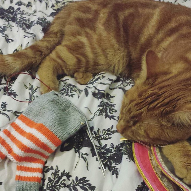 knitting with this guy beside me 😻 he's calmed down a lot today, finally sleeping without waking and freaking out a little. Vet tomorrow for a check up! #knittersofinstagram #georgethecat #catsofinstagram