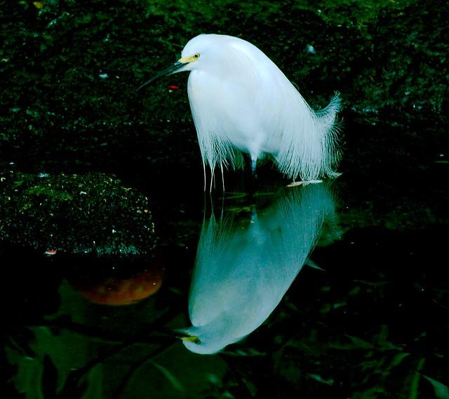 Egret_1