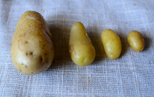 May 27th 2012 - Family of Potatoes | by The Hungry Cyclist