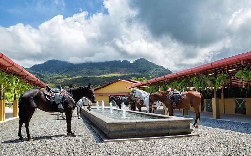 Horses at Hacienda AltaGracia