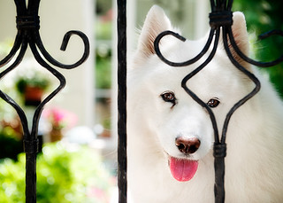 Cute White Dog | by E.L.A
