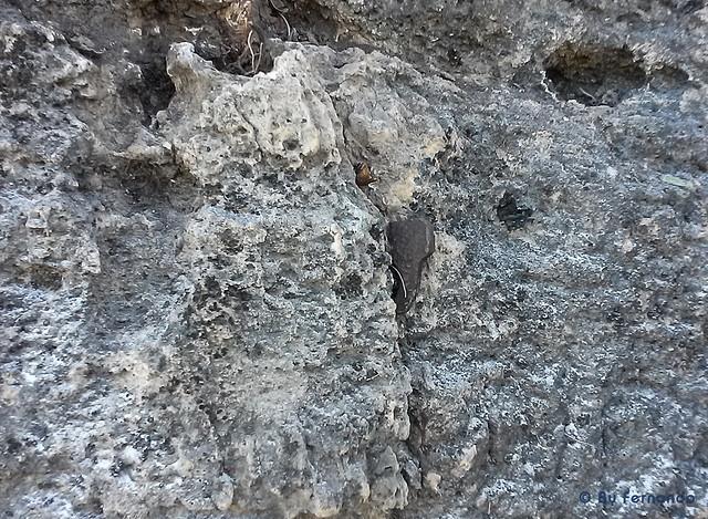 Aumosta - Detalle del clavo (a la altura de la última chapa)