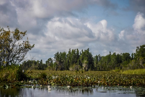 Lowcountry Unfiltered at Okefenokee-056