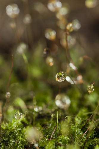 Drops and moss | by PongsawatD