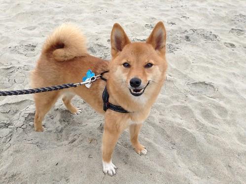 Ocean Beach Dog Friendly Vacation Rentals