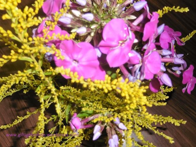 Blumengruß ausn Garten, August 2016