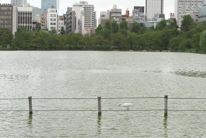 東京路地裏散歩 不忍池 2016年9月8日