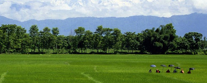 Paddy fields near Hetauda, Nepal, with the Himalayas in the background.