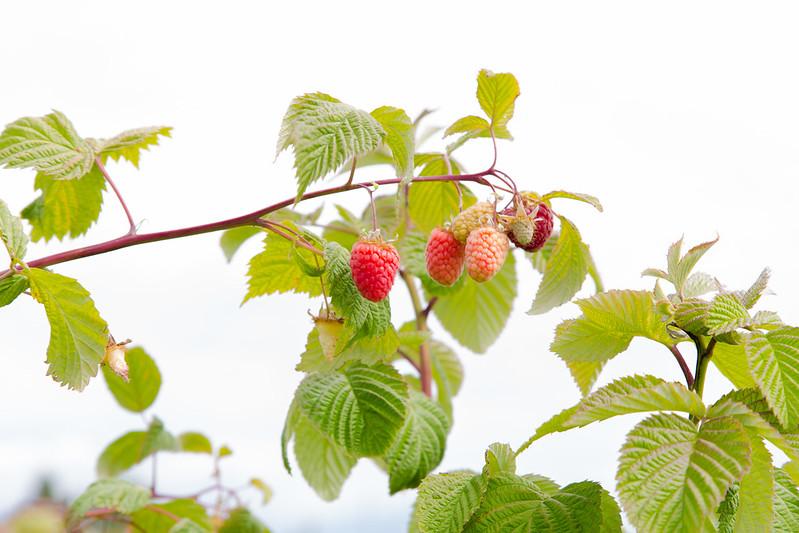 Strawberry Raspberry Sauce