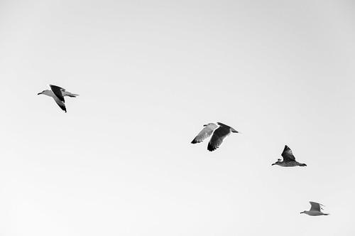 foto aves