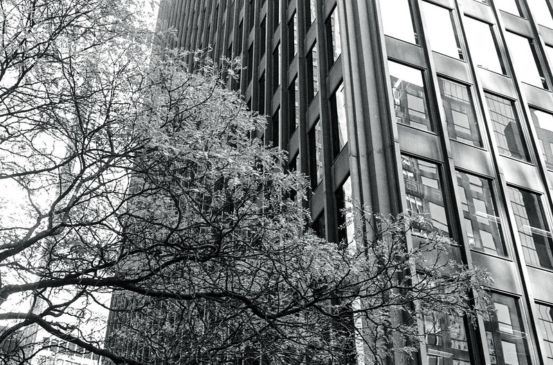 Tree and Office Tower_