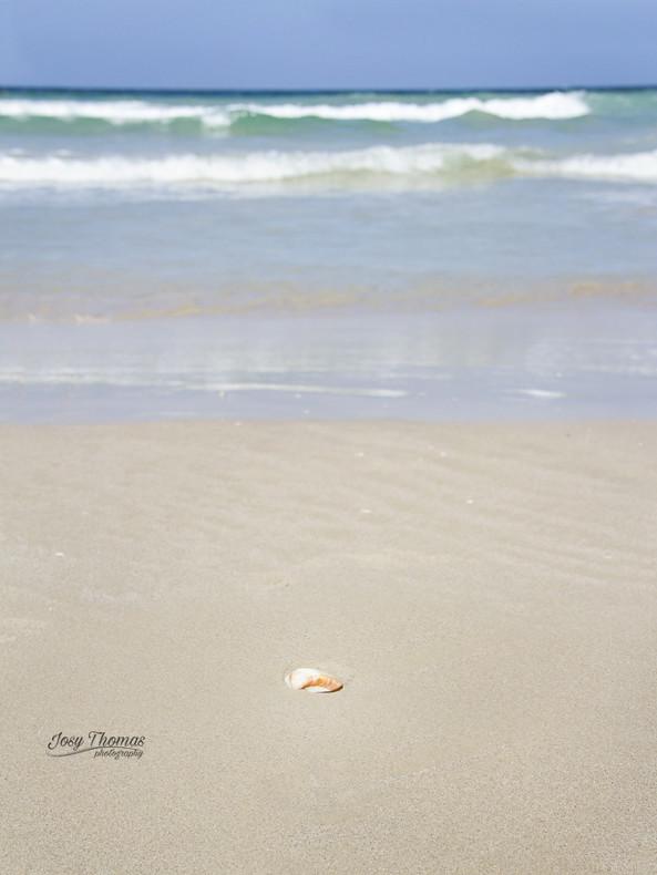 Un Guacuco en Playa Guacuco