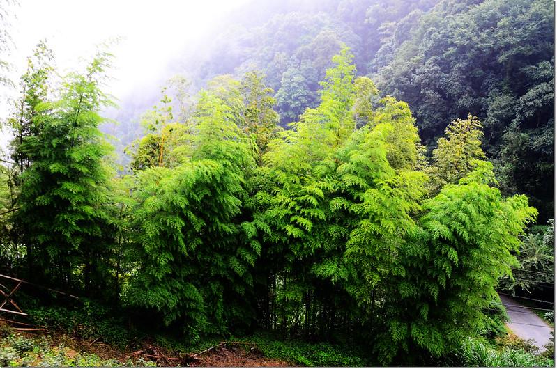 忘憂森林的綠 (6)