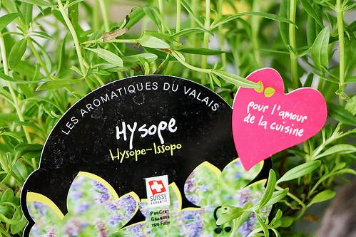 Ysop Kräuterstock, Les Aromatiques du Valais