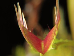 Sample Imagery from Carnivorous Plants and their Habitats (19)