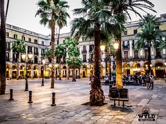 barcelona (1 of 1)-7
