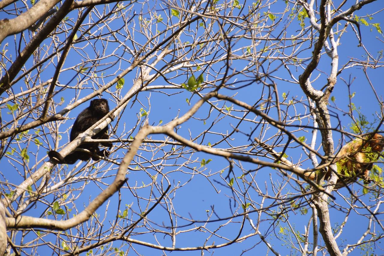 pantanal21