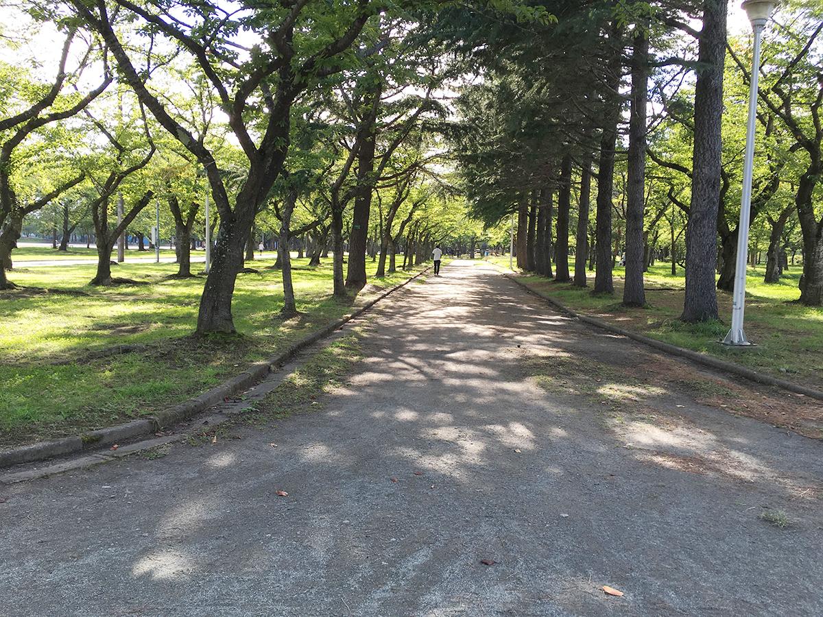 合浦公園の中の道
