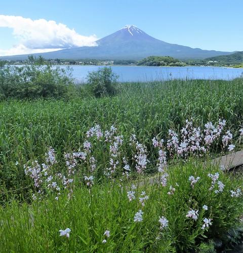 jp16-Fuji-Kawaguchiko-Nord-Shizen Seikatsu-kan (2)