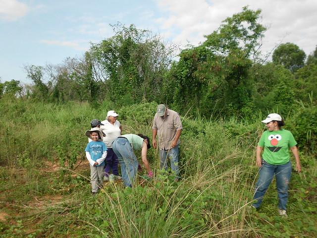 Siembra de ceibas en Bosque Educativo UCAB Guayana - 01.10.2016