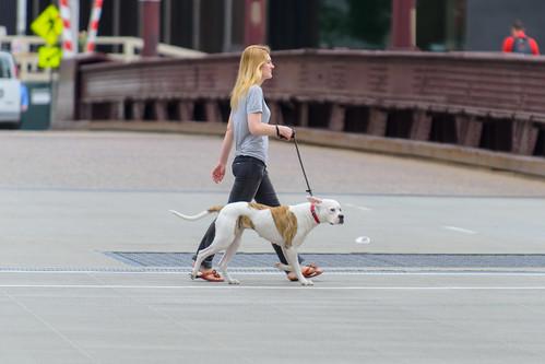 Dog Walking Company Bond
