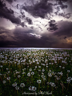 Gone to Seed | by Phil~Koch