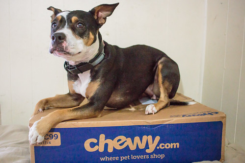 Chewy-7909