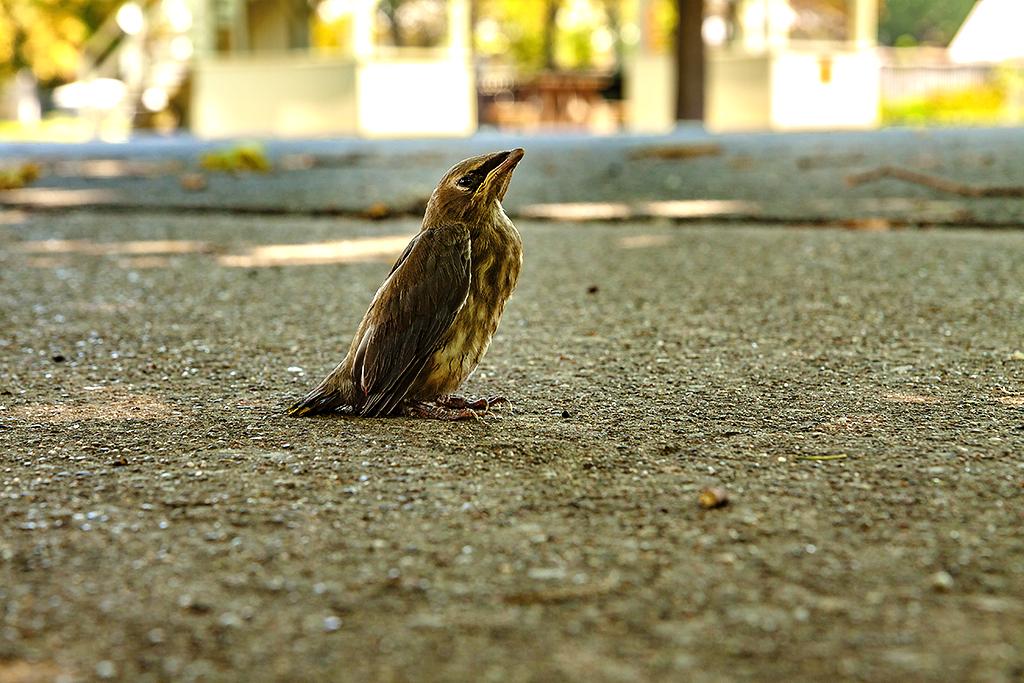 Bird--New-Harmony