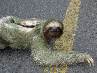 sloth20052small | by lucycookie