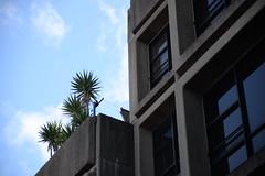 Sirius Building, Millers Point
