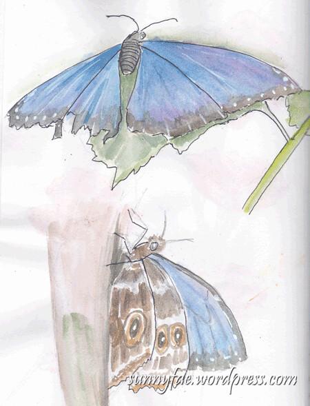 zoo-blue-butterfly-sketches
