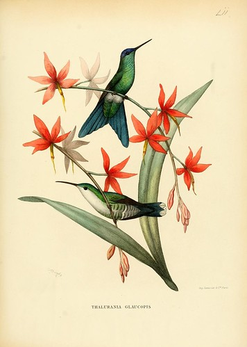n110_w1150 | by BioDivLibrary